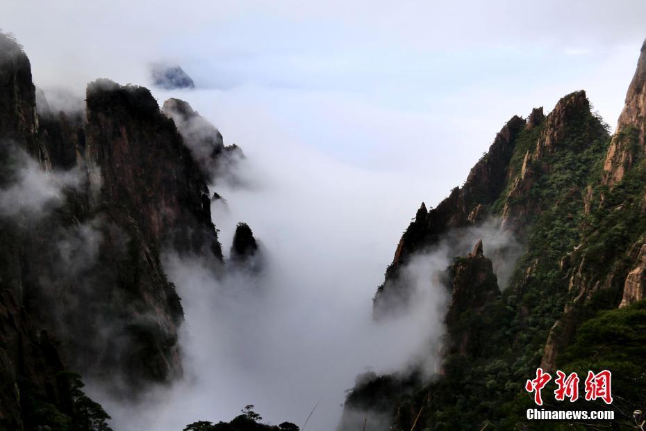 山东荣成:越冬大天鹅北迁